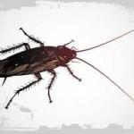 Ácido bórico contra las cucarachas