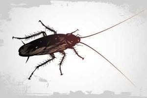 Ácido bórico para eliminar cucarachas