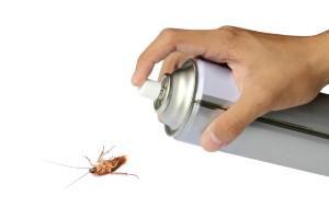 ¿Cómo eliminar cucarachas pequeñas en casa?