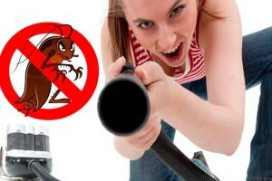 Cómo matar cucarachas con remedios caseros