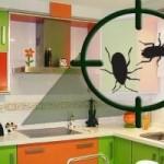 Cómo prevenir y eliminar las cucarachas