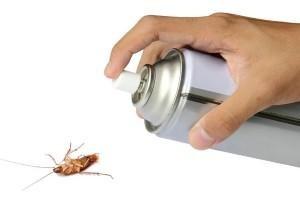 Como acabar con las cucarachas en casa definitivamente - Como terminar con las hormigas en casa ...