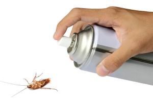 Cómo acabar con las cucarachas en casa definitivamente