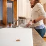 Como eliminar cucarachas definitivamente de la casa