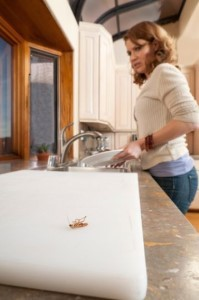 Como eliminar cucarachas definitivamente de la casa - Como eliminar los mosquitos de mi casa ...
