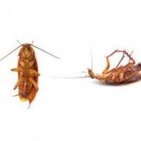 informacion-sobre-las-cucarachas