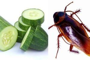 Remedios caseros para las cucarachas en casa pepino