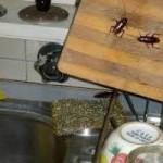 Como deshacerse de las cucarachas en casa para siempre