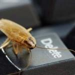 Cómo combatir las cucarachas en el hogar: remedios caseros
