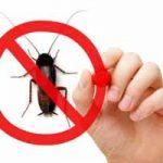 ¿Qué enfermedades producen las cucarachas a los humanos?