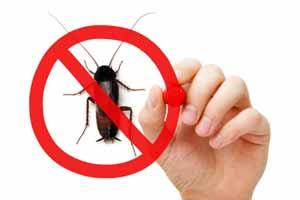 Qué enfermedades producen las cucarachas a los humanos