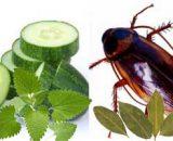 Olores que odian las cucarachas: aromas para ahuyentar chiripas